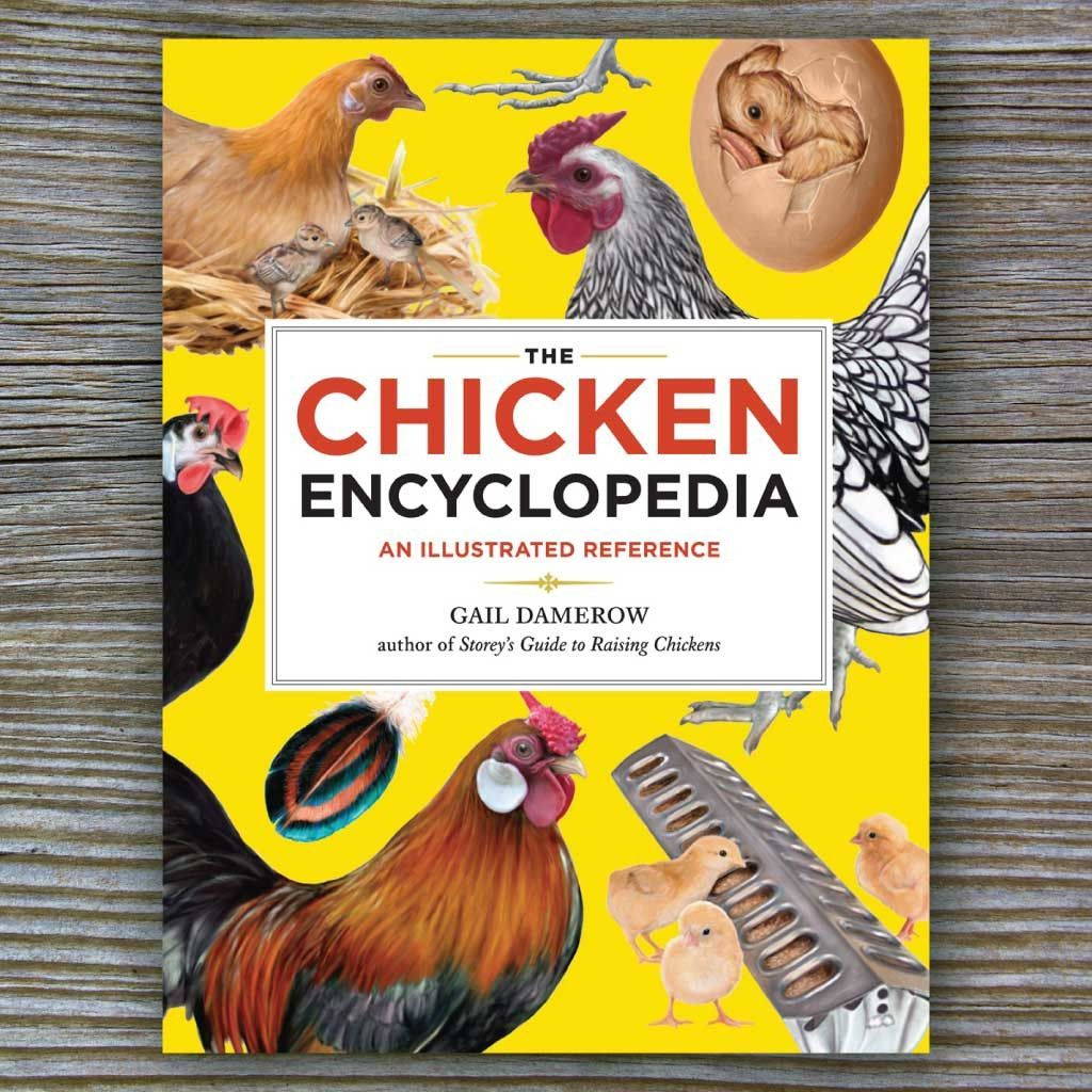 a complete index of chicken related terms fully illustrated for