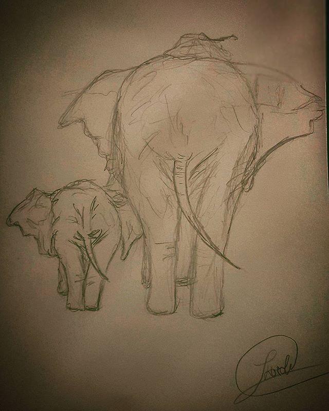 Goodnight Drawing Draw Elephant Elefant Bleistiftzeichnung