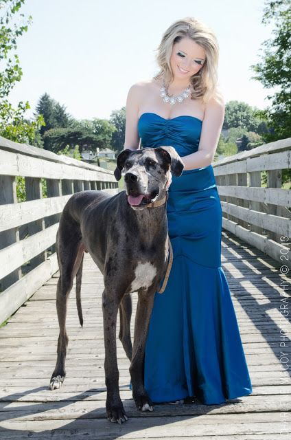 Great Dane Photo Great Danes And Lady Fashion Dogs Breed