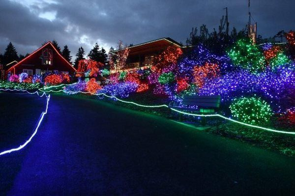 Plan A Trip To This Zoo Lights Show Zoo Lights Woodland Park Zoo Trip