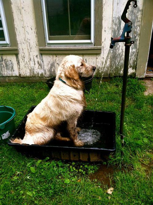 12 Fab Outdoor Shower Ideas Outdoor Dog Dog Wash Dog Washing