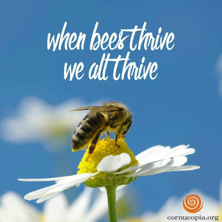 Pin By Bee On My Humble Abode: Pin By Chaney Hicks On Bees