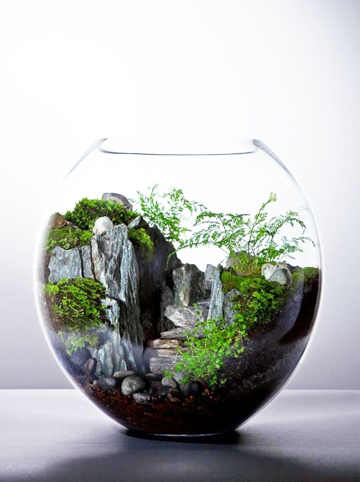 beautiful terrarium terrarium pinterest pflanzen g rten und deko. Black Bedroom Furniture Sets. Home Design Ideas