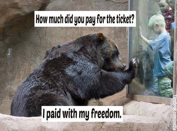 Boycott Zoos Animals Animal Activism Stop Animal Cruelty