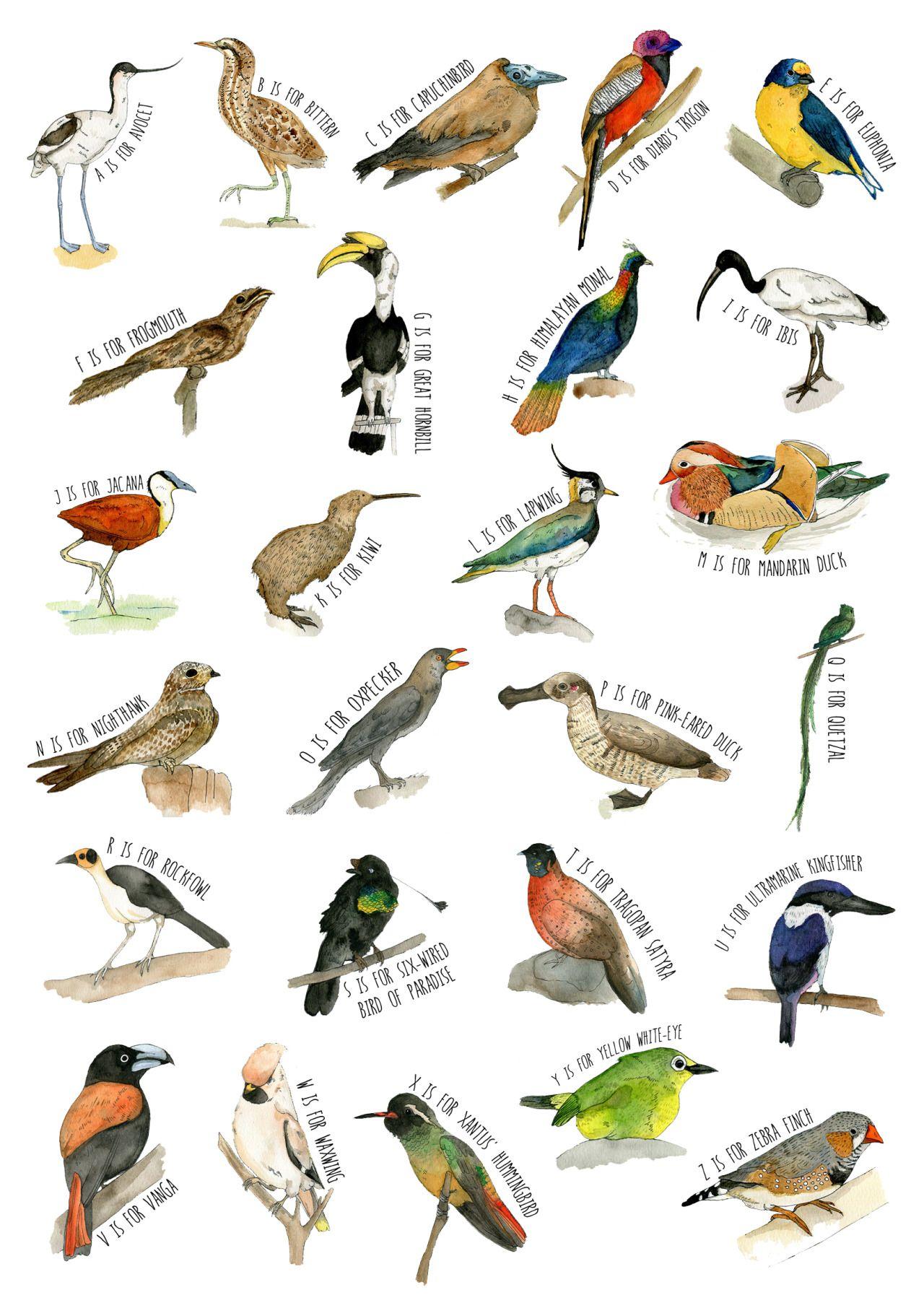 Zsazsabellagio Animals Name List Card Illustration Illustration