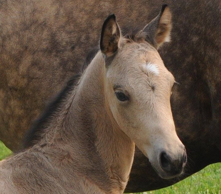 Another adorable foal ❤️