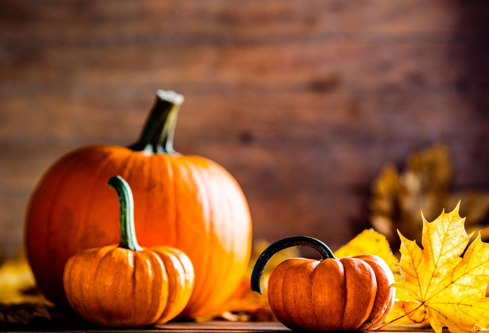 Happy National Pumpkin Day With Halloween Thanksgiving Right Around The Corner It S Perfect Have You Carved Your Pumpkin Y Pumpkin Carving Pumpkin Carving