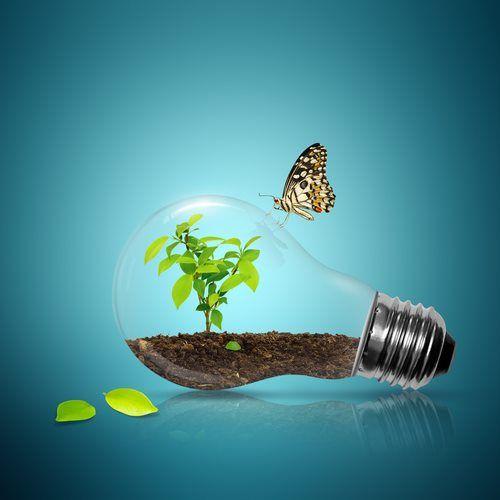 Plante uma árvore, contribua para a sustentabilidade. A Nutriplan apoia essa ideia.