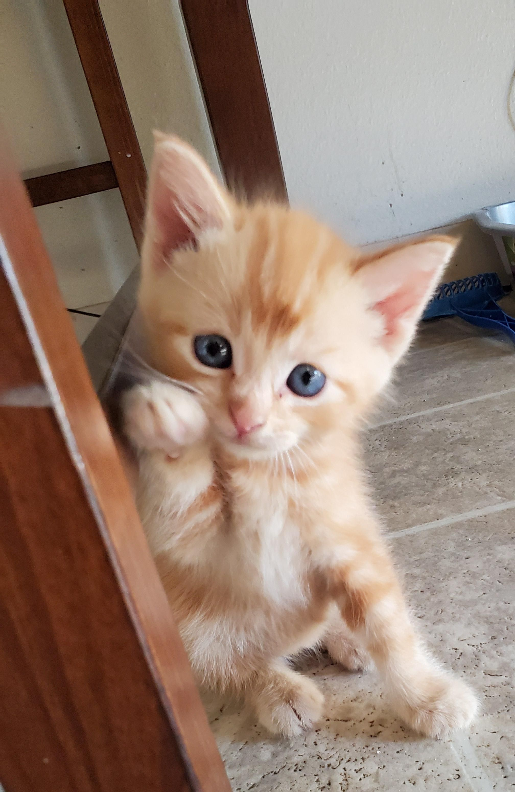 The Newest Member Of Our Family Says Hello This Is Sun Music Indieartist Chicago Cats And Kittens Cute Cats And Kittens Kittens Cutest