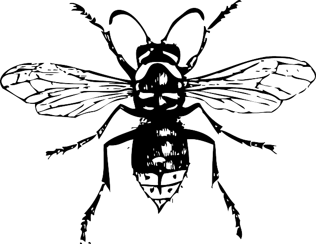 free image on pixabay hornet bee insect pszczoły pinterest