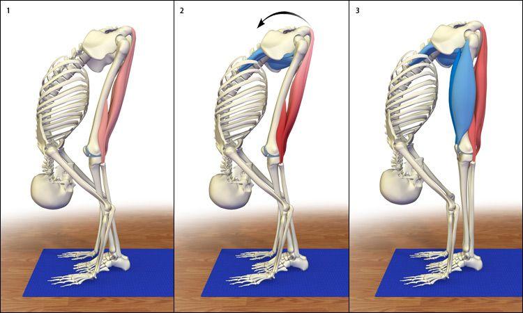 Uttanasana: Liberación los tendones de la corva con Uttanasana ...