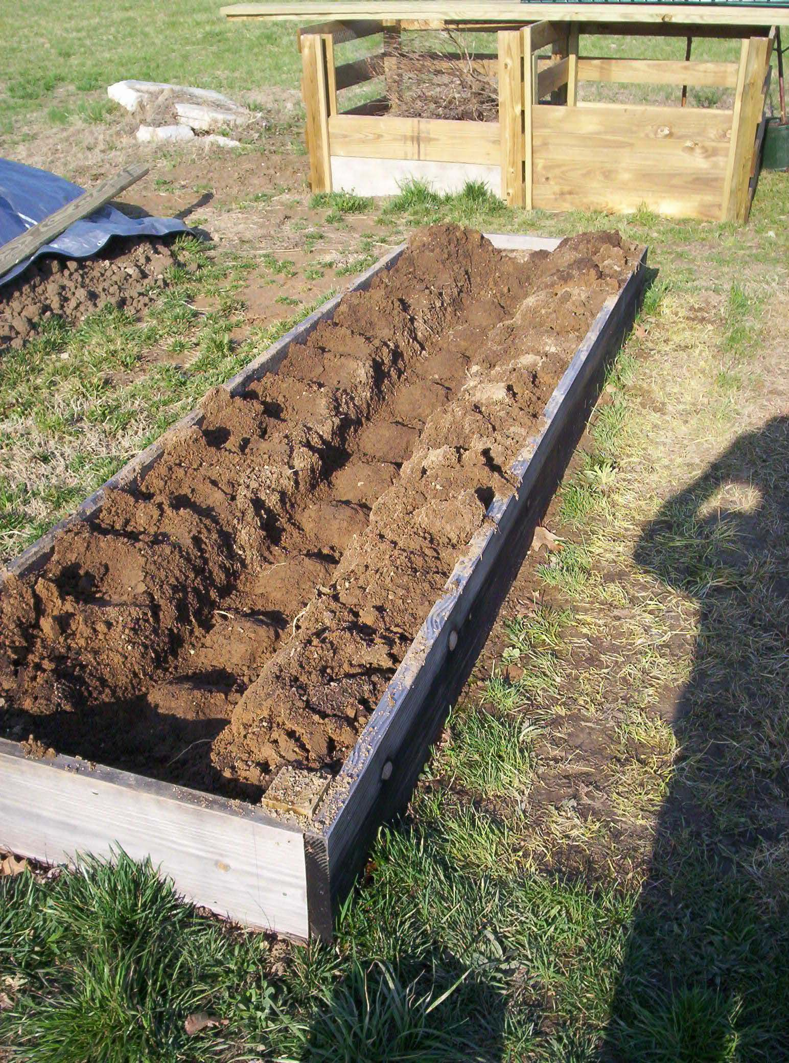"""Asparagus raised bed, 3x12' long bed planted 12"""" apart."""