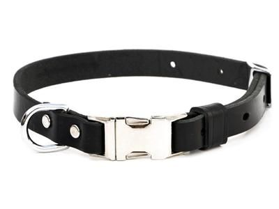 Custom Leather Dog Collars by Bold Lead Designs