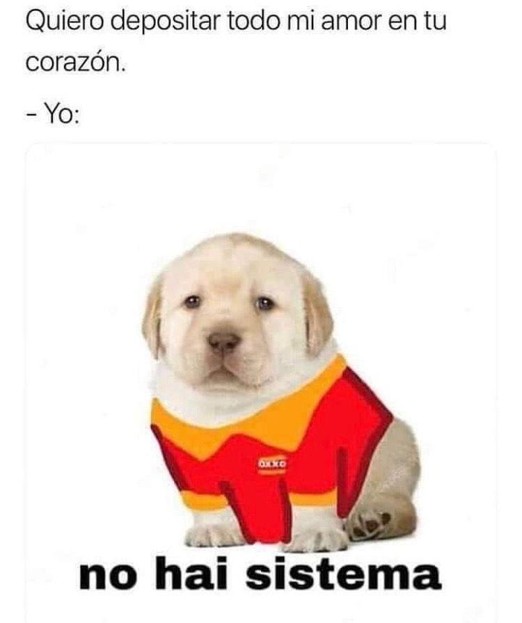 Pin By Riva Lok On Memelandia Cute Memes Memes Funny
