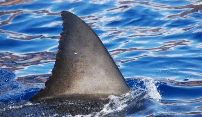 Dauphin island sperm whale photo join