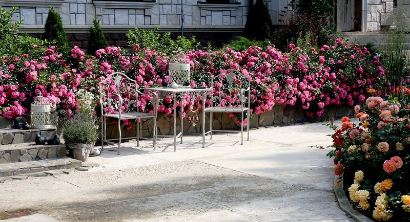 Trend Palmengarten Frankfurt rose