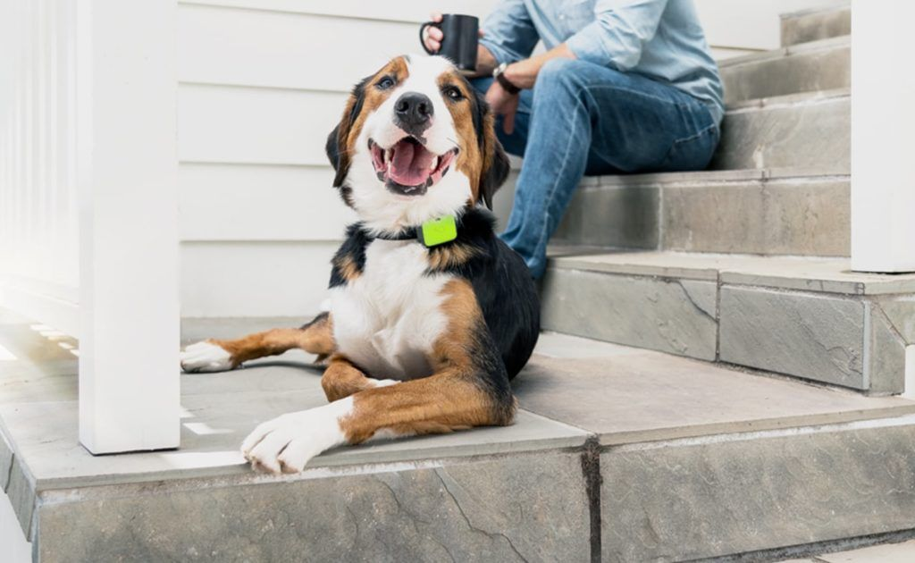 Whistle Go Explore Pet Location Tracker Keeps An Eye On Your Pet S