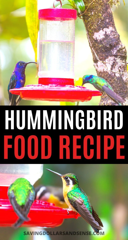 Diy this easy hummingbird nectar recipe saving dollars