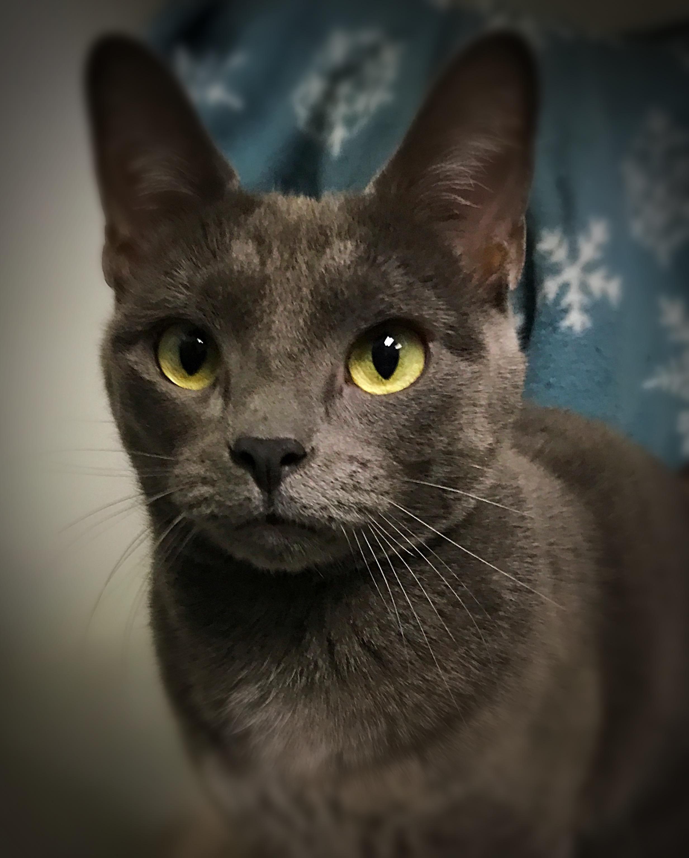 Adopt Glen on Pets, Animal shelter, Animals