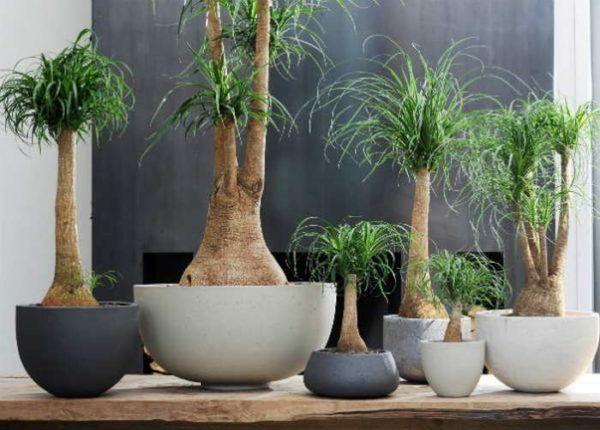 20 Bonitas Formas De Decorar La Casa Con Plantas De Interior - Plantas-bonitas-de-interior