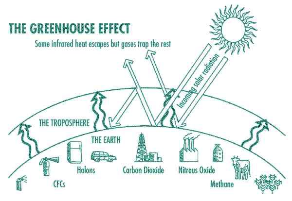 the chain effect of the greenhouse effect and global warming The greenhouse effect is caused by the rise in greenhouses gasesthe change in the climatic conditions is referred as global warming.