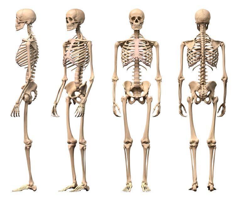 Anatomyhumandb.info – Page 78 – Human Anatomy For Men And Women ...