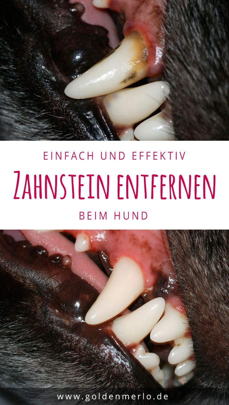 Zahnpflege beim Hund [Werbung]
