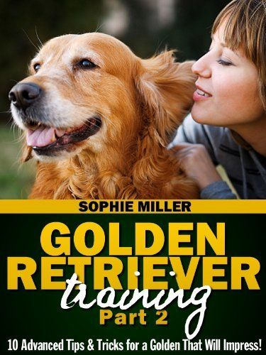 Golden Retriever Training Part 2 10 Advanced Tips Tricks For A