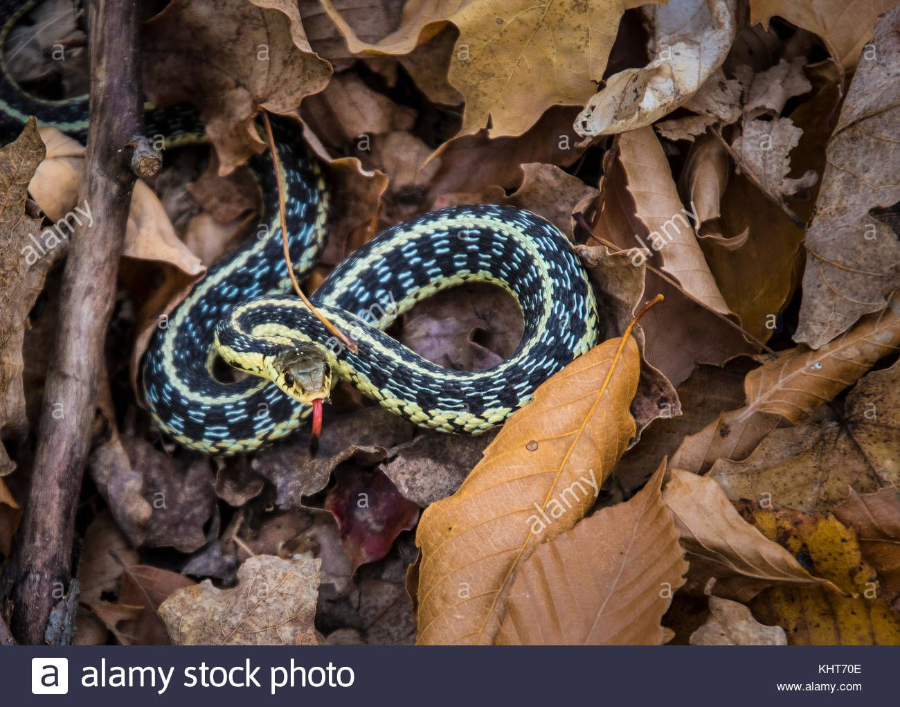 Pin By Claire Taylor On Garter Snake Animals Snake Reptiles