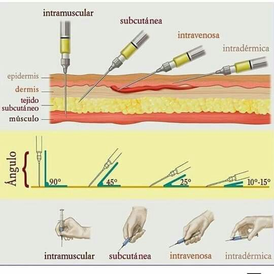 Resultado de imagen para tipo de inyectables en animales