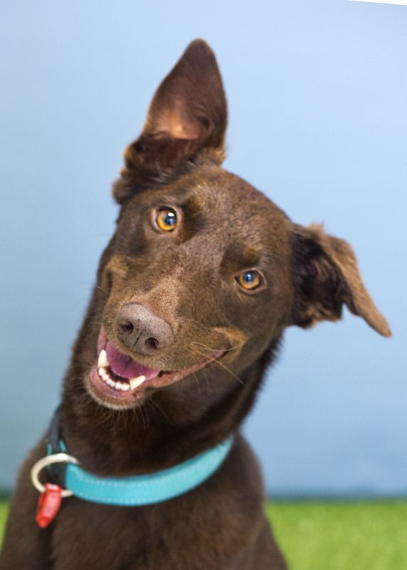 Audrey RSPCA Adopt a pet Pets, Love to meet, Audrey
