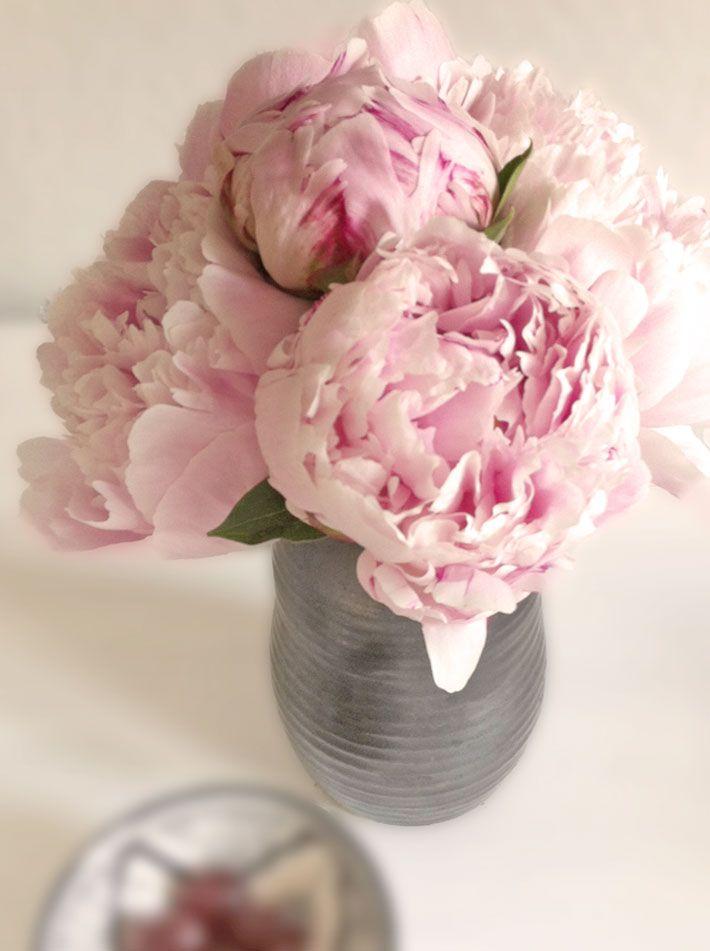 Amalie Loves Denmark Sweet Peonies Blossom Flower Peonies Flowers
