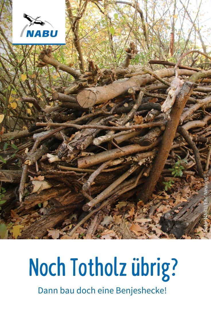 Aus Totholz Wird Neues Leben Nabu Naturgarten Holz Im Garten Garten Upcycling