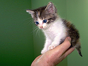 The Best Age for Taming Feral Kittens Feral kittens