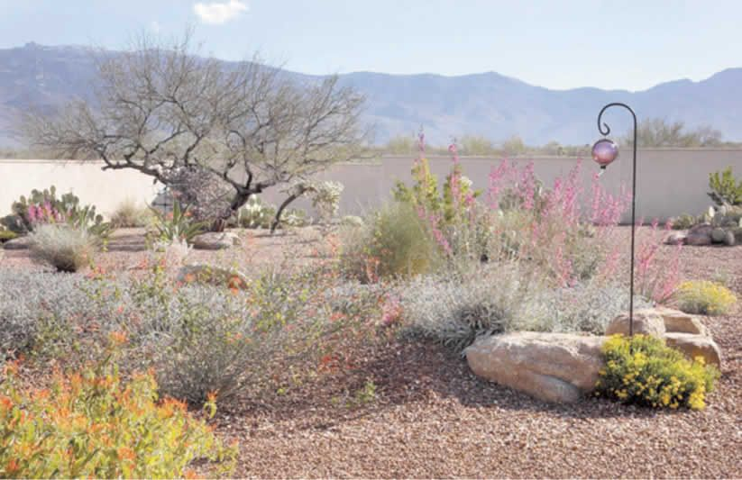 Xeriscapes Tucson Az Arizona Gardening Native Plant Gardening