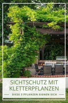 Sichtschutz mit Kletterpflanzen: aber mit welchen?