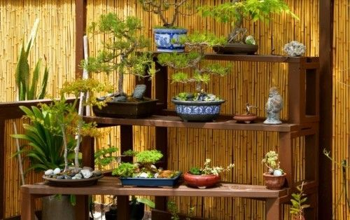 Tiered bonsai bench: Los Angeles