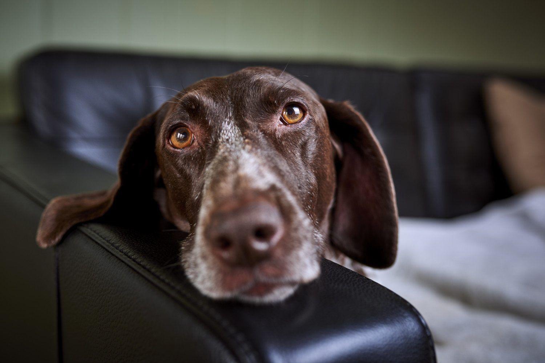 dog food recall over salmonella