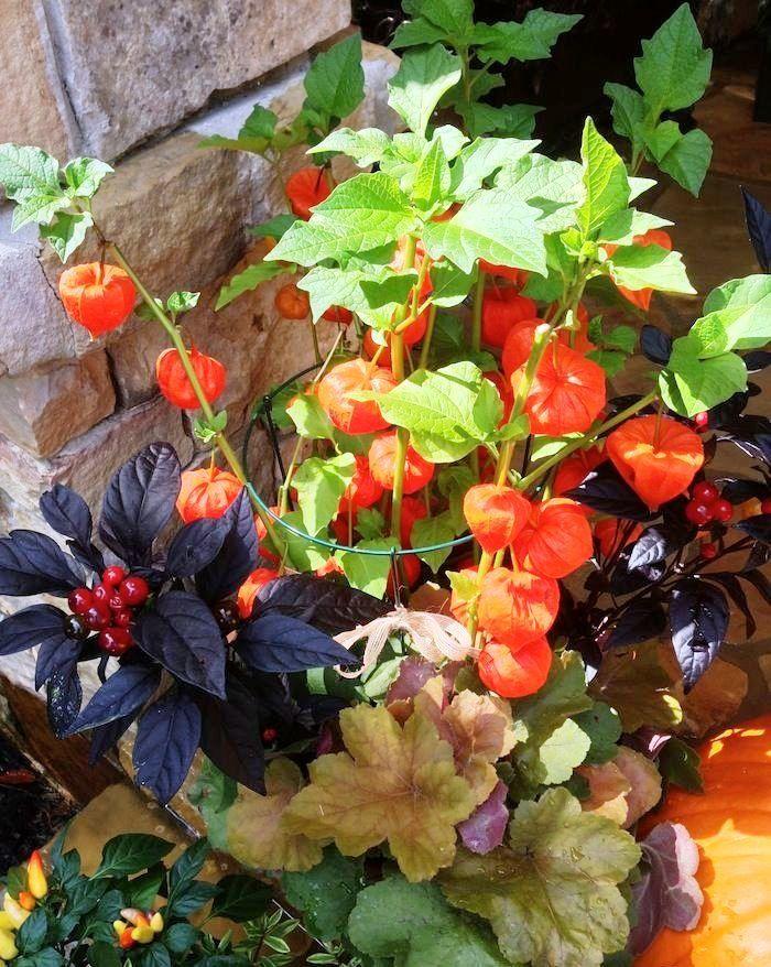Pin On Ogrodnictwo Kwiaty Bukiety