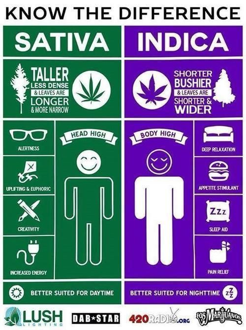 Drag to resize or shift move weed facts types cannabis also rh pinterest
