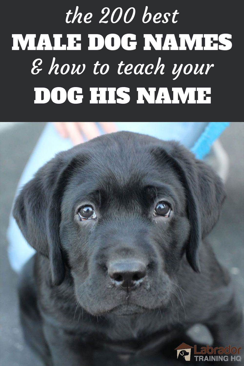 200 Best Male Dog Names And How To Teach Your Dog His Name In 2020 Dog Names Best Male Dog Names Black Dog Names