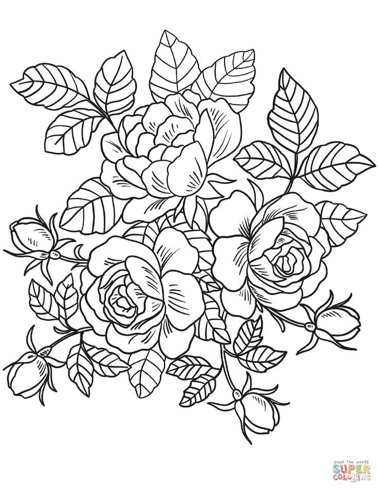 Roses Flowers Coloring Page Free Printable Coloring Pages Rose Coloring Pages Detailed Coloring Pages Shape Coloring Pages