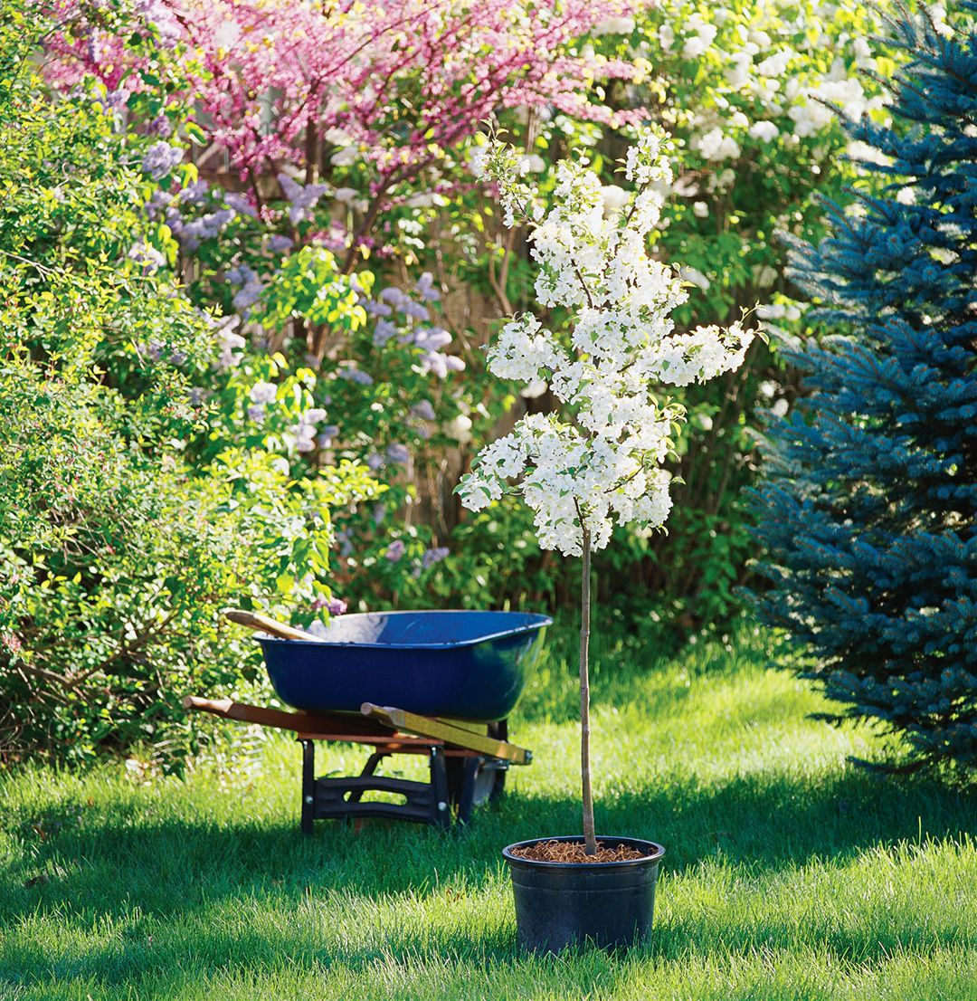Fall Is The Best Time To Plant A New Tree Here S How To Do It The Right Way Trees To Plant Plants Spring Garden