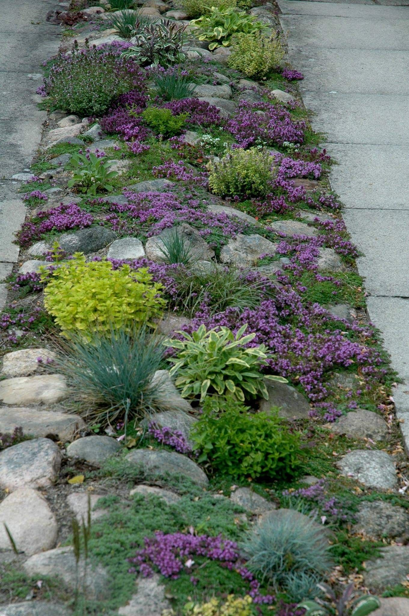 Pin by melody krumrey on gardening pinterest gardens yards and cheap landscaping ideas flower gardening yard ideas driveways outdoor living middle ribbon cacti paths izmirmasajfo