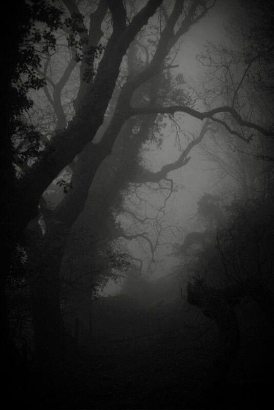 Idea by Jeanne Loves Horror💀🔪 on Trees | Dark wallpaper ...