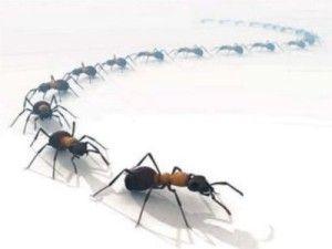 15+ Pour tuer les fourmis dans le jardin ideas