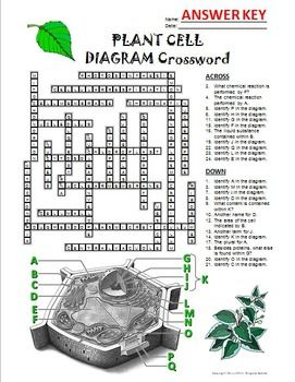 Plant Cell Crossword with Diagram {Editable} | Plant cell ...