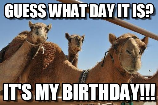 Funny It S My Birthday Meme : Pin by kandi koated on its my birthday bissshhhh