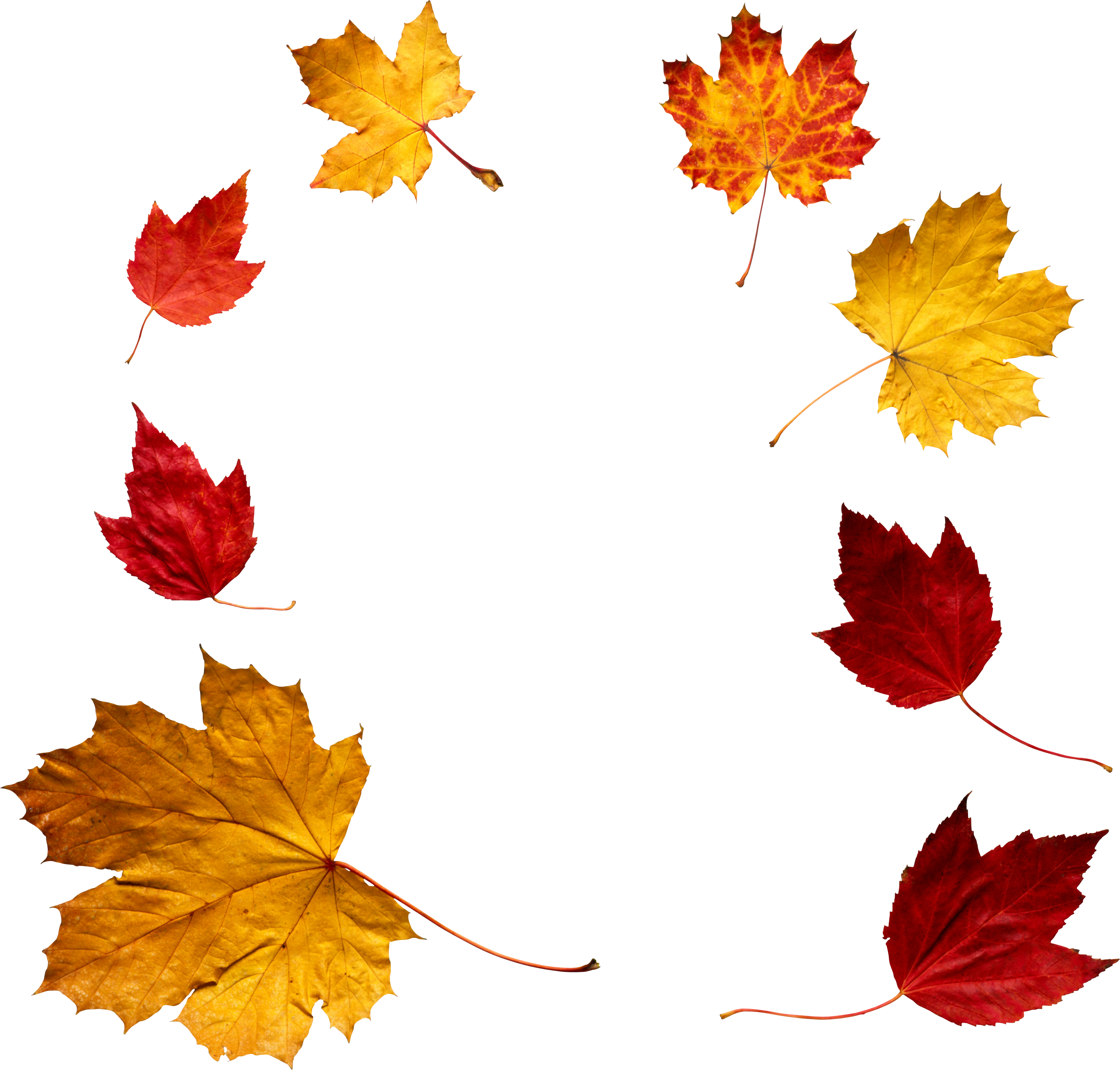 Autumn Leaf Png Image Autumn Leaves Png Png Images