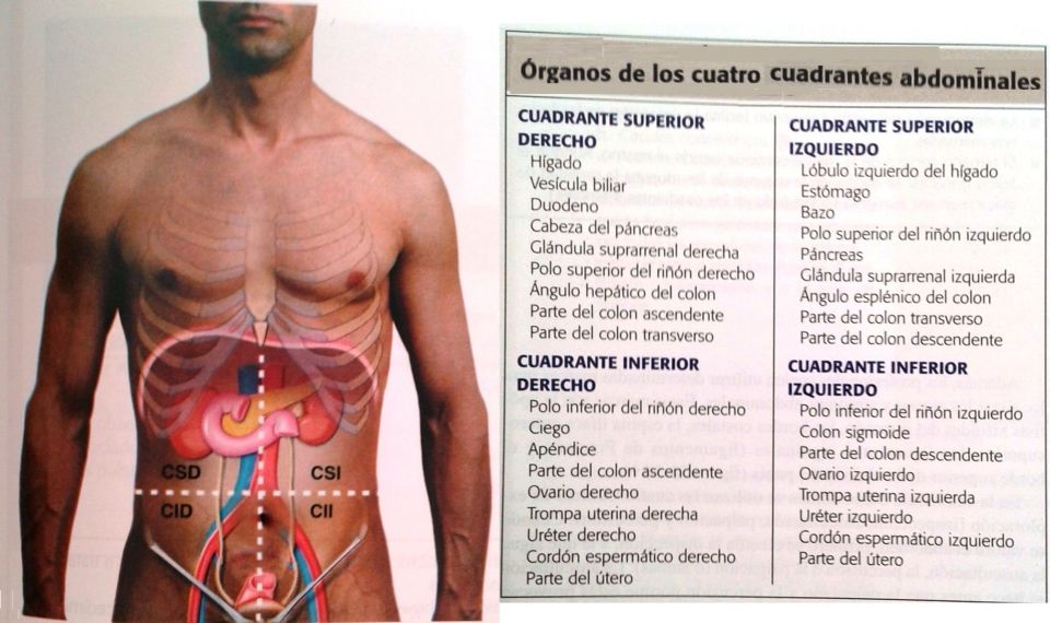 Cuadrantes abdominales | salud | Pinterest | Anatomy